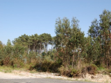 Land For Sale in Caldas da Rainha Leiria Portugal